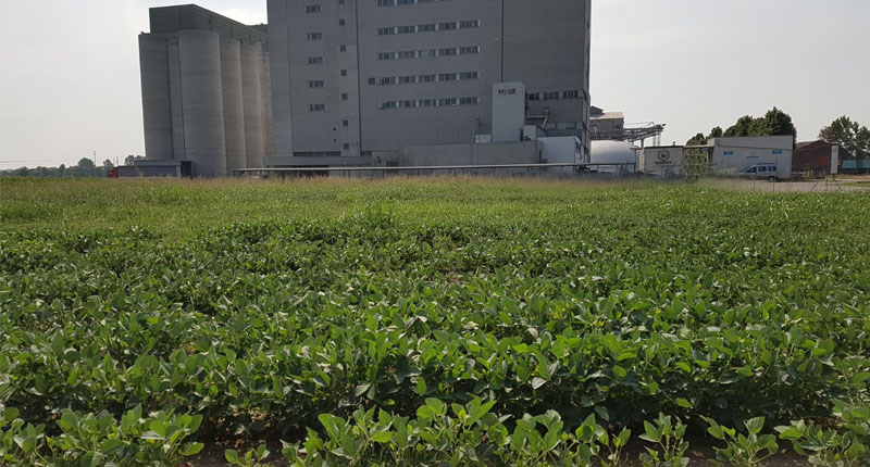 Ganaceto_cover_crop_soia