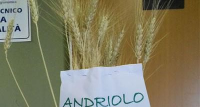antica_varietà_ANDRIOLO