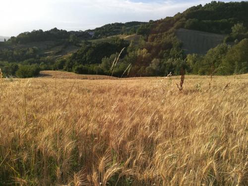 Az. Borgo Malt. Aquilante